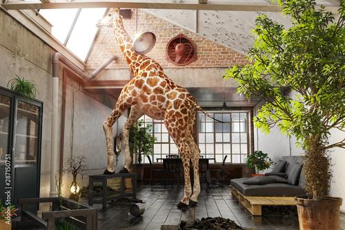 Giraffe steht in Wohnung auf Holzbank und schaut aus dem Dachfenster Wallpaper Mural