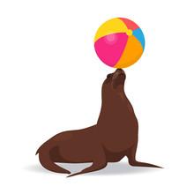 Seal Balancing Colored Ball On...