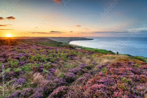 Cadres-photo bureau Brun profond Summer heather in bloom on the North York Moors