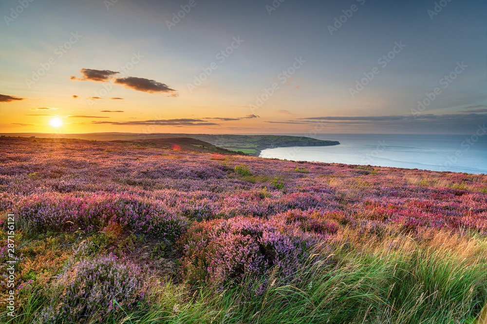 Fototapeta Sunset over heather in bloom on the North York Moors National Park