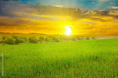 plakat Green field and blue sky with light clouds. Above the horizon is a bright sunrise.