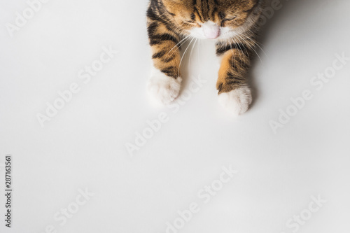 In de dag Kat Little cute cat legs paw on white background with copy space for text and advertising
