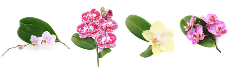 Naklejka na ściany i meble Beautiful orchid flowers and leaves on white background