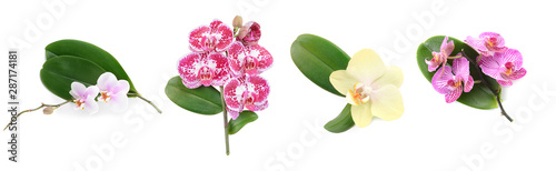 Beautiful orchid flowers and leaves on white background