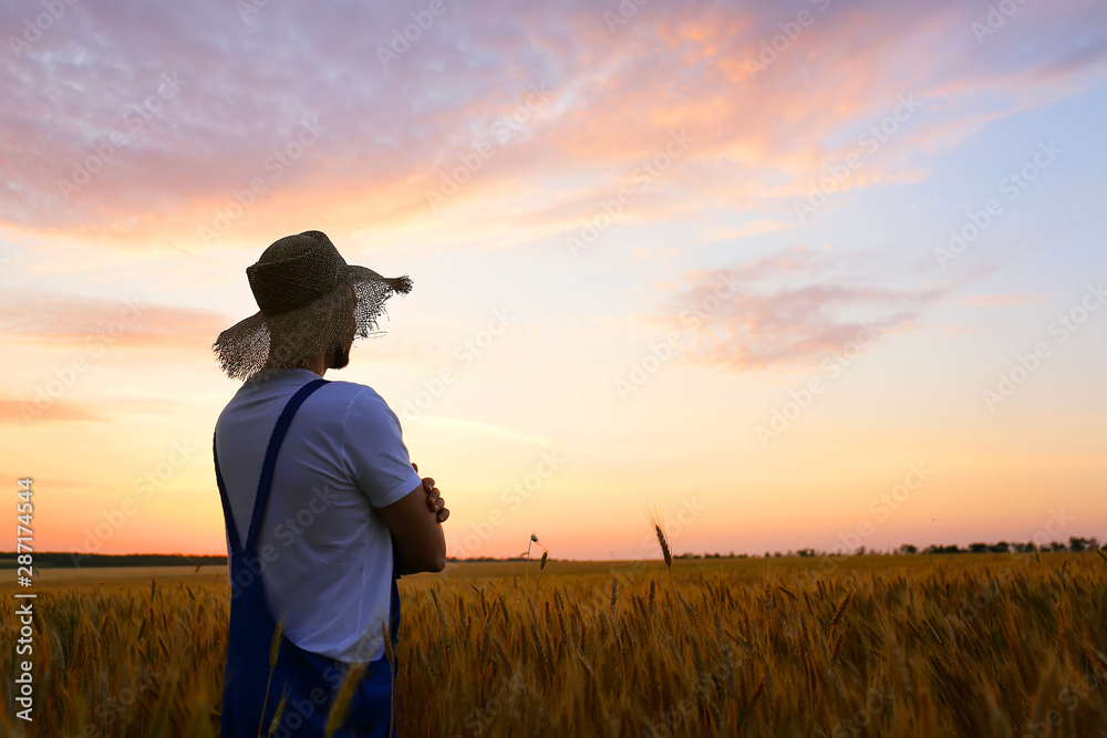 Fototapety, obrazy: Male farmer in wheat field at sunset