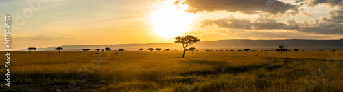 A panoramic view on the Masai Mara while sunset Canvas Print