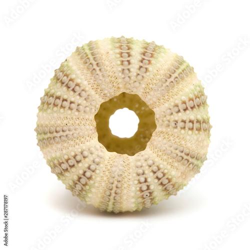 Fototapety, obrazy: sea urchin skeleton