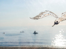 Sea Gulls On The Sea, Summer Vibes