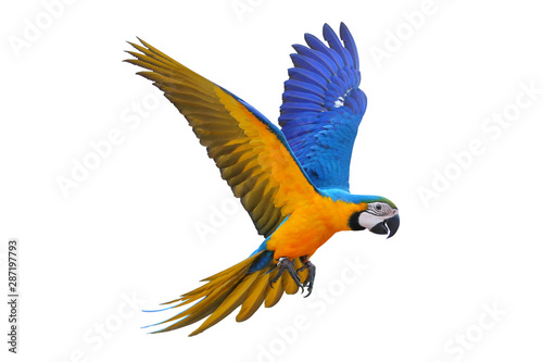 Autocollant pour porte Perroquets Blue and gold macaw isolated on white background.