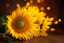 Beautiful Yellow Sunflowers On Wooden Table At Festive Bokeh Background. Autumn Festive Still Life.