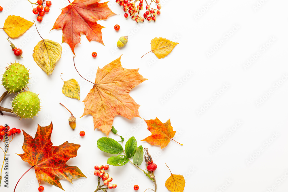Fototapety, obrazy: Autumn composition made of leaves, berries on white background. Autumn concept for Thanksgiving day or for other holidays. Flat lay, copy space.