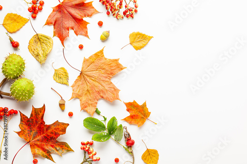 Foto auf Leinwand Natur Autumn composition made of leaves, berries on white background. Autumn concept for Thanksgiving day or for other holidays. Flat lay, copy space.