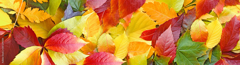 Fotografía Beautiful colorful autumn leaves on ground, falling autumn leaves in forest