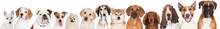 Red And White Dogs Portraits L...