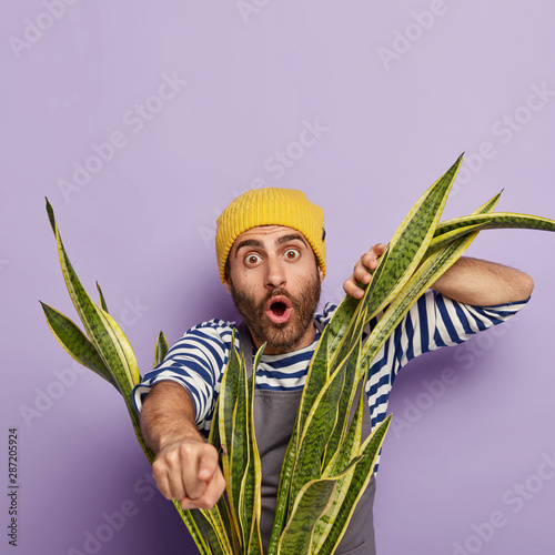 Obraz Photo of horrified surprised man florist indicates with index finger at camera, looks through domestic snake plant, wears yellow hat, apron and striped casual jumper, isolated on purple background. - fototapety do salonu