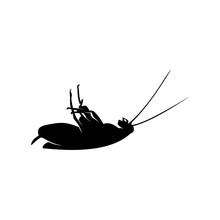 Cockroach Logo Design Vector I...