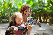 Kids Hold Python Snake At Zoo. Child And Reptile.