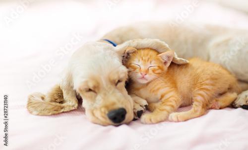 kot-i-pies-spi-szczeniak-i-kotek