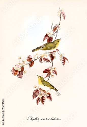 Photo Two cute yellowish little birds aon a single isolated branch full of red leaves