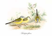 Yellow Little Cute Birds Getti...