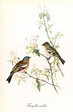 Two Little Cute Birds Looking ...