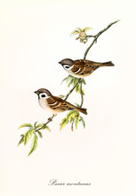 Two Isolated Little Birds On A...