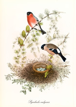Two Colored Birds Watching Ove...