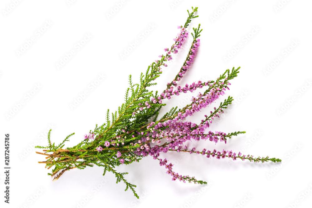 Fototapety, obrazy: Purple heather flowers