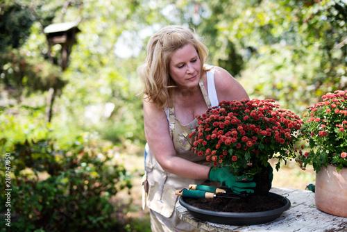 Fototapety, obrazy: Frau freudig bei der Gartenarbeit mit Blumen, chrysanthemen