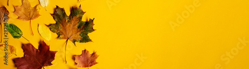 Pinturas sobre lienzo  Flat lay of nature colorful autumn leaves on yellow background