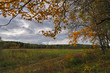Sunset at the forest edge. Autumn landscape.