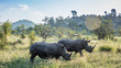 canvas print picture - Southern white rhinoceros in Kruger National park, South Africa