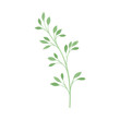 Branch with rare leaves. Vector illustration on a white background.
