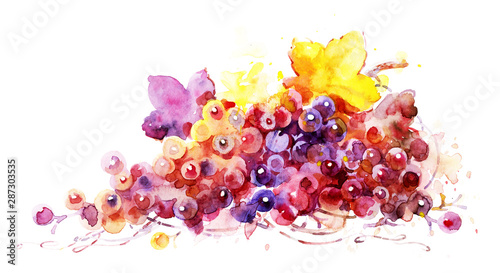 Fototapeta grape vine on white paper, watercolor illustration. obraz na płótnie