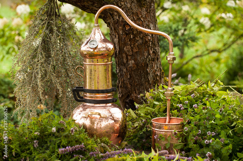 Fototapeta Alembic is a distilling apparatus of Arabic origin which may be used to distill essential oils and a variety of alcoholic beverages. Artemisia abisinthium  distillation. obraz