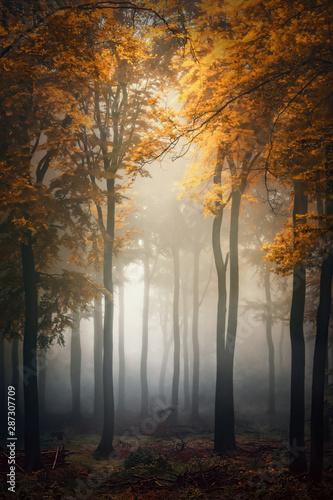 Obraz na plátně  Fall / Herbst