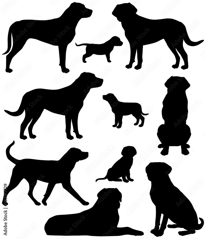 Fototapeta Collection of silhouettes of greater swiss mountain dog breed