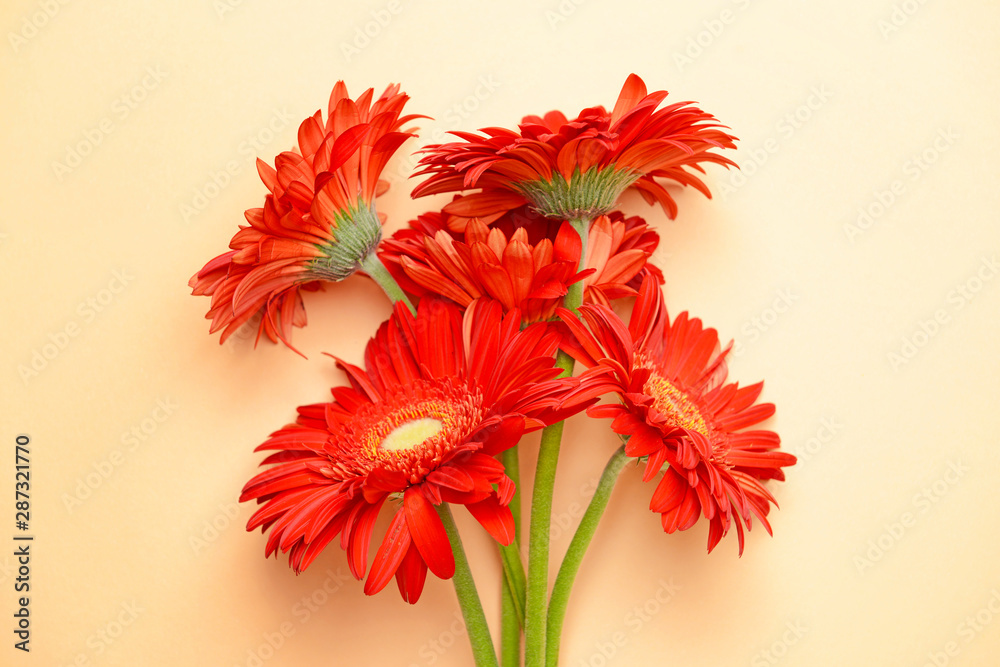 Fototapety, obrazy: Beautiful gerbera flowers on color background