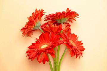 Beautiful gerbera flowers on color background
