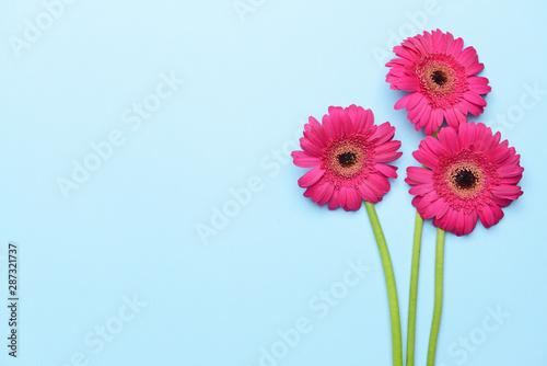 Poster de jardin Gerbera Beautiful gerbera flowers on color background