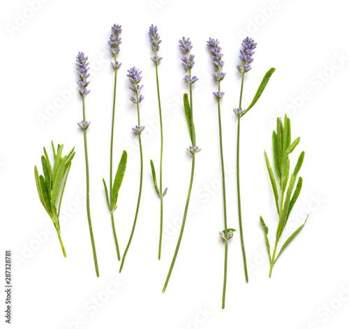 Lavender flowers set on a white