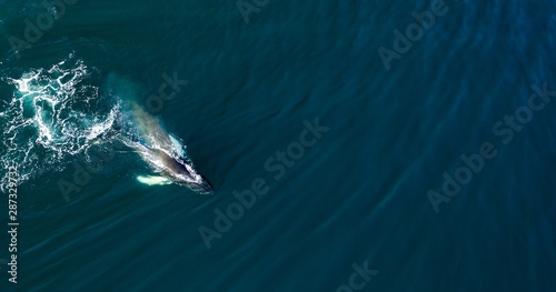 Fotomural  Aerial view of huge humpback whale, Iceland, Europe.
