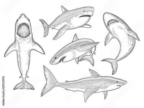 Shark hand drawn Canvas Print