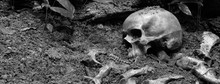 The Skulls And Pile Of Bone In...