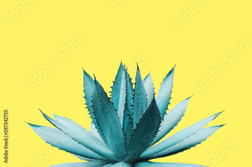 Agave Plant in Blue Tone Color on Yellow Background Colorful Design Image Wallpaper Mural