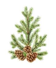 Watercolor Vector Green Spruce Arrangement With Cones, Christmas Tree.