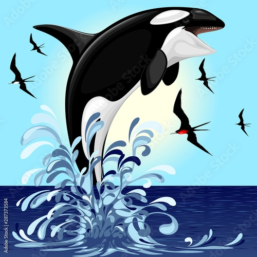 Door stickers Draw Orca Killer Whale jumping out of Ocean Vector illustration