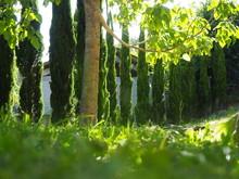 Jardin De Campo Tumbado En El Suelo Con Sol Sobre Cesped Y Abetos