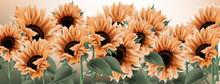 Sunflower Watercolor Backgroun...