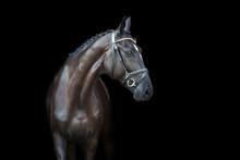 Black Horse Portrait On Black ...